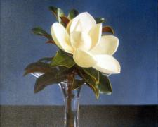 "Richard Wood, ""Magnolia"", 2002, oil on canvas, 24 x 24"""