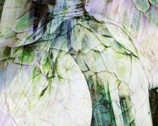 "artichoke and fennel, 2019, archival inkjet pigmented print, s.s. 16 x 22"" / f.s. 24 x 30"", ed. 1/7"