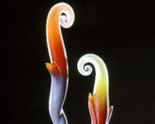 Aurora, 2003, hot-worked and cast glass, 28 x 9 x 9""