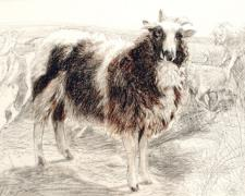 Jacob's Ram: The Hireling Shepherd, 2003, conte on paper, 13 1/2 x 19 1/2""