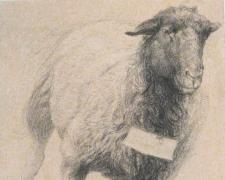 Leaping Ewe 2007 conte crayon/acrylic wash on paper 13 x 10""