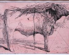 """Red Heifer - Study, 2008, pen and ink, acrylic wash, 4 1/2 x 7"""""""