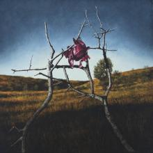 Cabbage Rose, 2016, oil on canvas, 30 x 30""