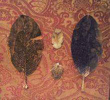 "The Two Emmas 2011 intaglio on sycamore leaf, found objects frame: 11 x 11"" / i.s. 6 1/2 x 8"""