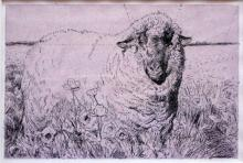 Gold Sheep Among Red Poppies - Study 2008 Pen and ink, acrylic wash 4 1/2 x 7""