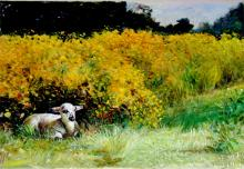 Lamb Among Marigolds 2005 Acrylic on paper 16 x 22""
