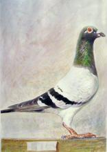 "Rock Pigeon - Annunciation 2009 Acrylic on paper 8 5/8 x 6 1/8"" i.s."