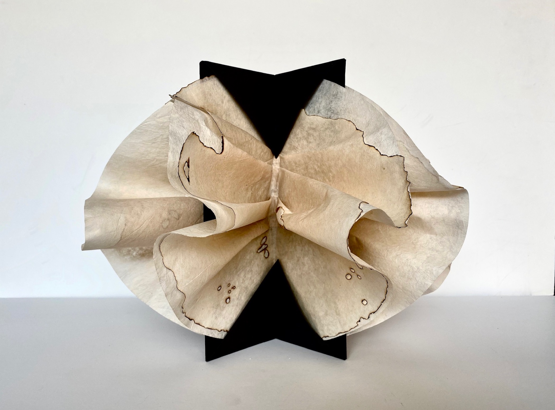 """Anna Mavromatis, """"Scorching August Affair (as seen by a woman)"""", 2019, paper sculpture: tea-toned industrial coffee filters with charred markings draped and held by a concertina folded center, 10 x 14 x 14"""""""