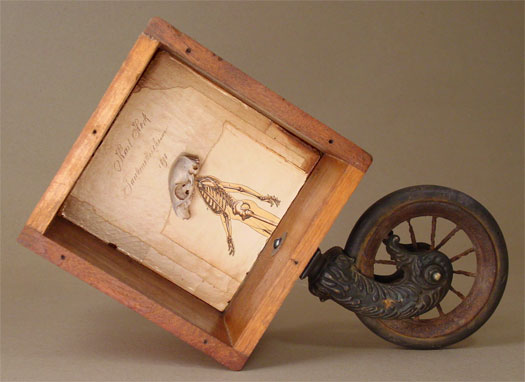 """The Short Life of Karl Heck 2006 Assemblage - wood box, piano wheel, book pages, squirrel skull 11 1/4 x 16 1/2 x 5 3/4"""""""